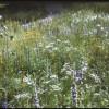 """WCLT Presents """"Earth Friendly Gardening"""""""
