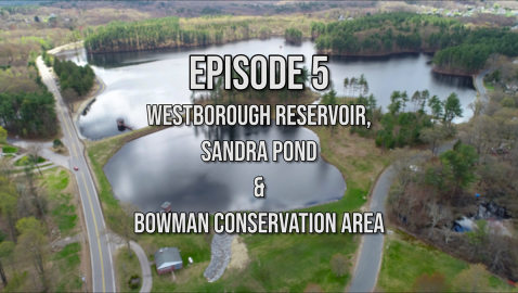 What's Up Westborough? Reservoir, Sandra Pond & Bowman Conservation