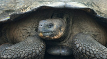 A Few Days in the Galapagos Islands Virtual Presentation