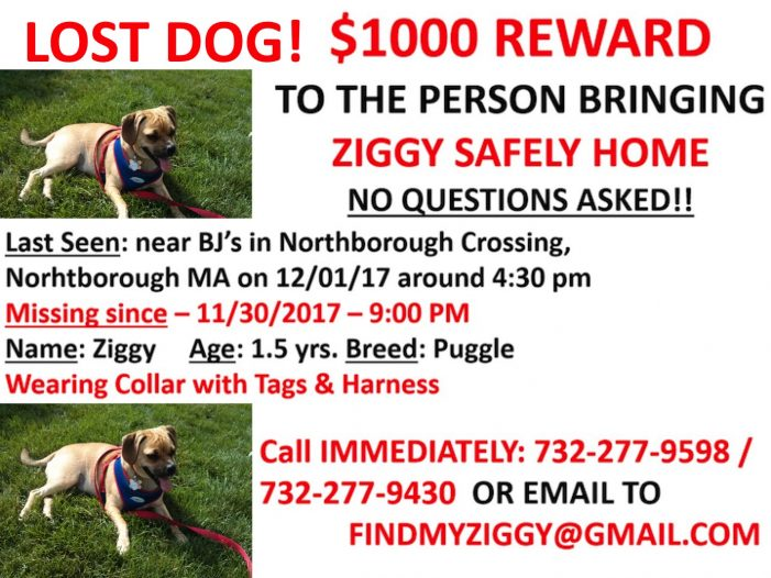 Lost Dog! Have You Seen Ziggy?