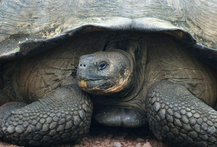 A Few Days in the Galapagos Islands Virtual Presentation