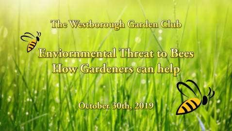 Environmental Threat to Bees: How Gardeners can help