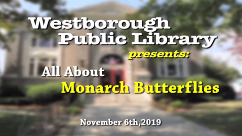 All About Monarch Butterflies!