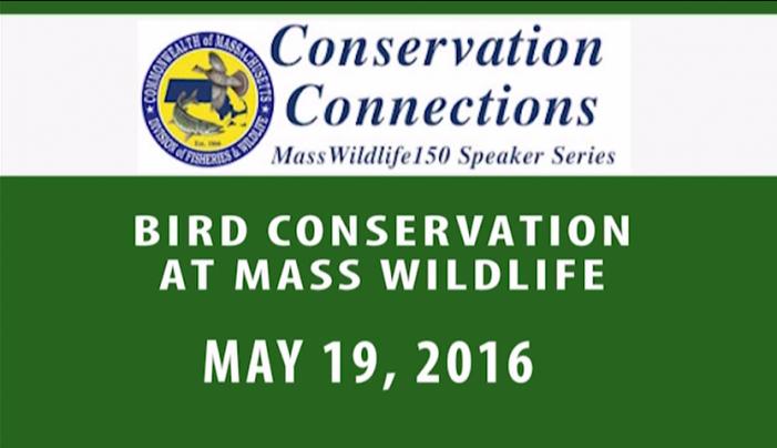 Bird Conservation at Mass Wildlife