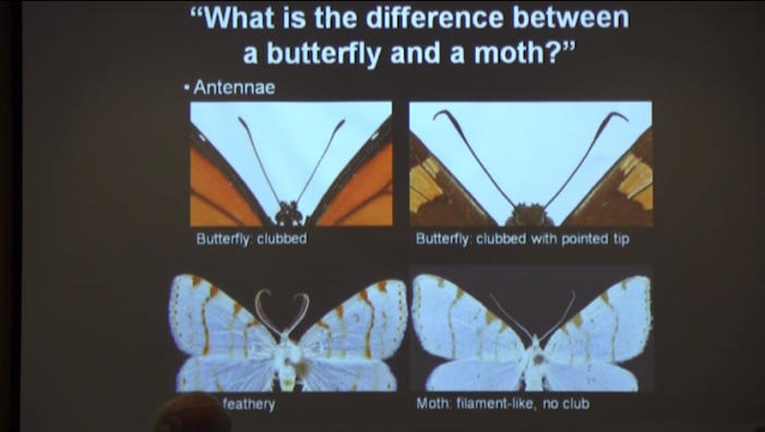 Mass Wildlife: Exploring Moths & Other Nocturnal Insects