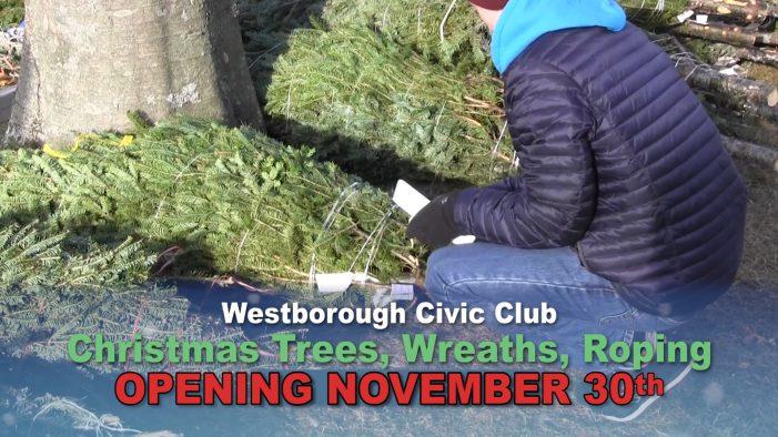 Civic Club Christmas Trees are back!