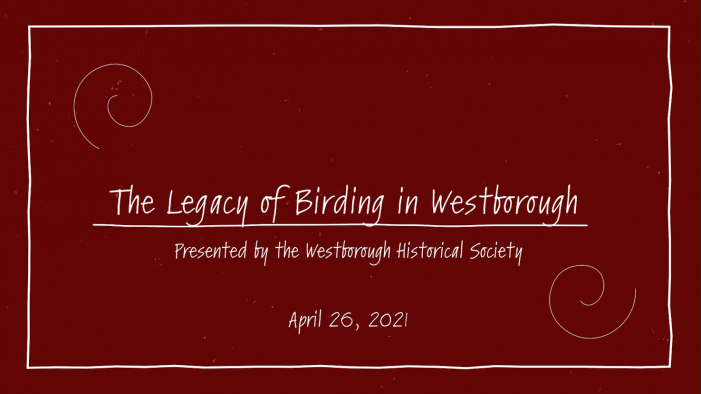 The Legacy of Birding in Westborough