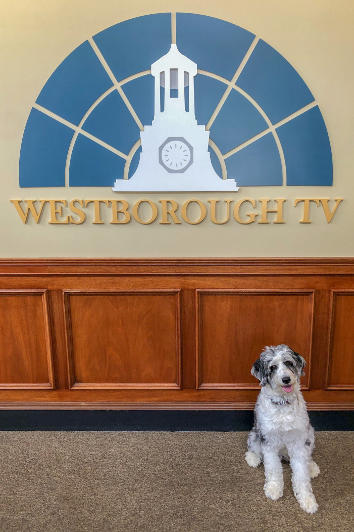 The Dogs Days of Summer…at Westborough TV